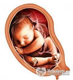 Вага плоду на 34 тижні вагітності - більше 2 кг