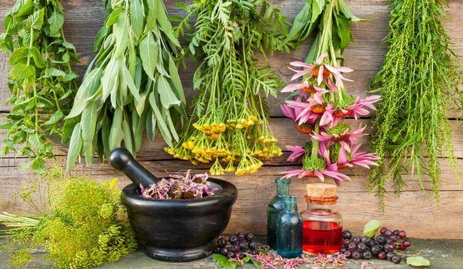 6 Правил приготування домашніх ліків з рослин
