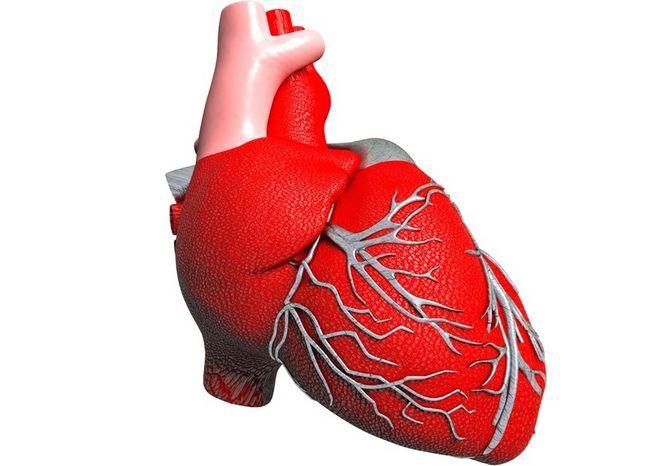 Розвиток хвороб серця