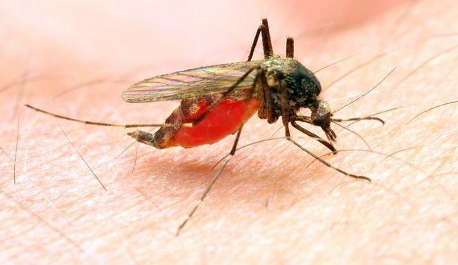 малярія