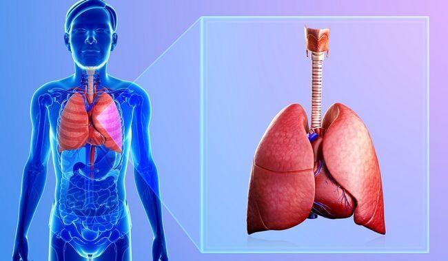 Тренування органів дихання