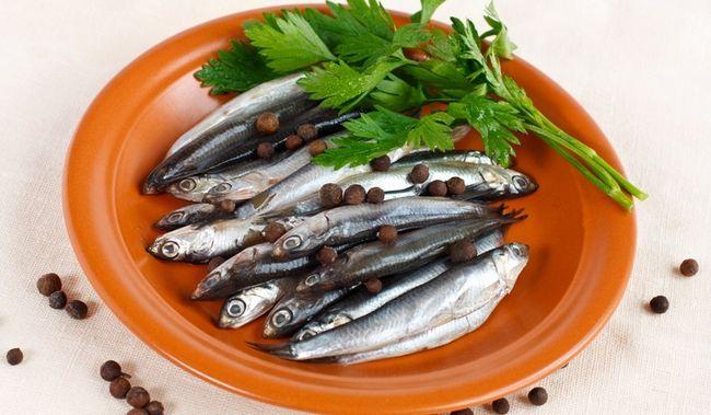 Анчоус - морська рибка