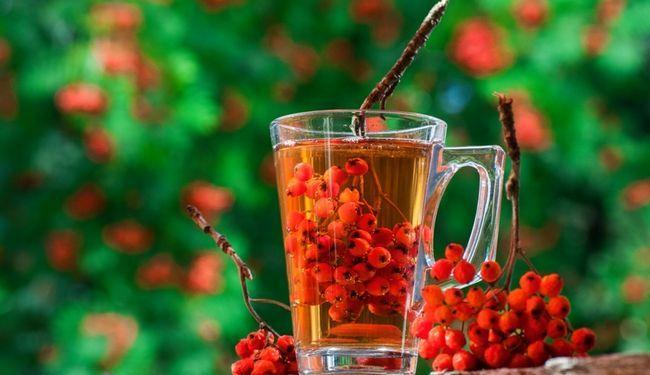 Горобина червона - лікарська рослина