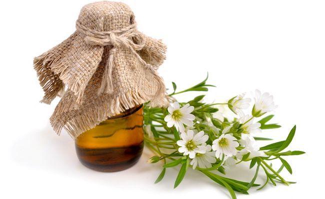 Свіжовіджатий сік мокриці - один з кращих засобів лікування патологій щитовидної залози і печінки