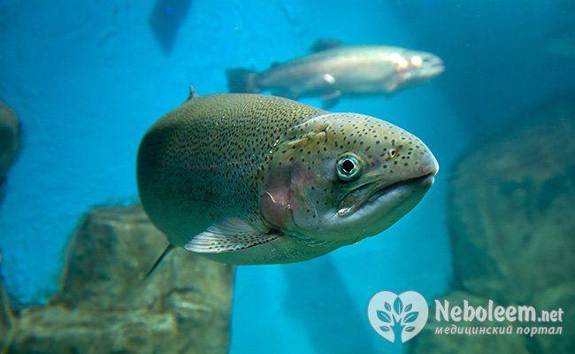 Дари моря: види, користь і шкода червоної ікри