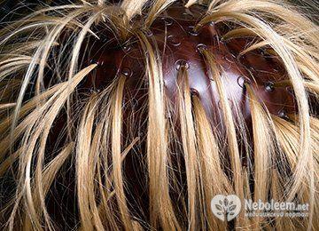 Як правильно зробити мелірування волосся в домашніх умовах