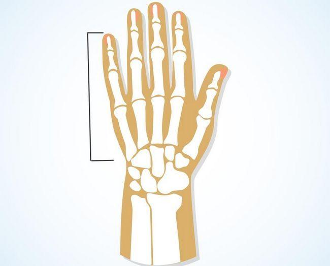 Фаланги пальців рук