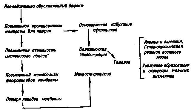 етапи патогенезу спадкового сфероцитоз