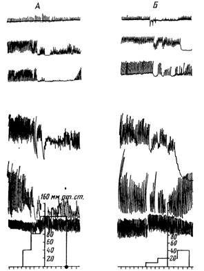Зміна чутливості мускулатури перфузованої і сусідній петлі тонкої кишки наркотизованого тваринного