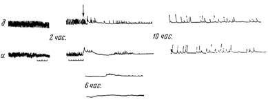 Характер змін скорочувальної активності гладкої мускулатури тонкої кишки при блискавичному перебігу експериментального калового перитоніту
