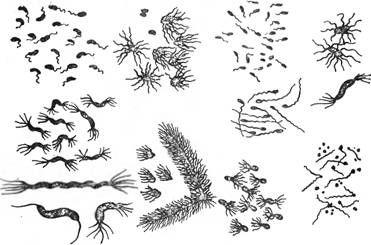 Джгутики у бактерій