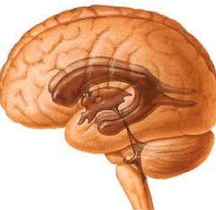 Колоїдна кіста головного мозку - патологія внутрішньоутробного розвитку