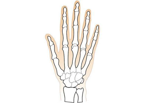 Кістки зап`ястя