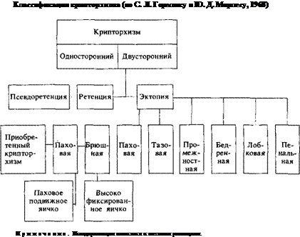 Класифікація крипторхізму