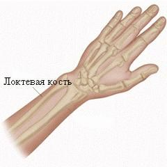 Ліктьова кістка людини