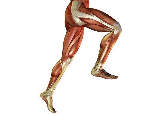 М`язи нижніх кінцівок