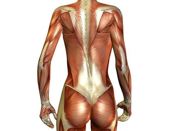 М`язи спини