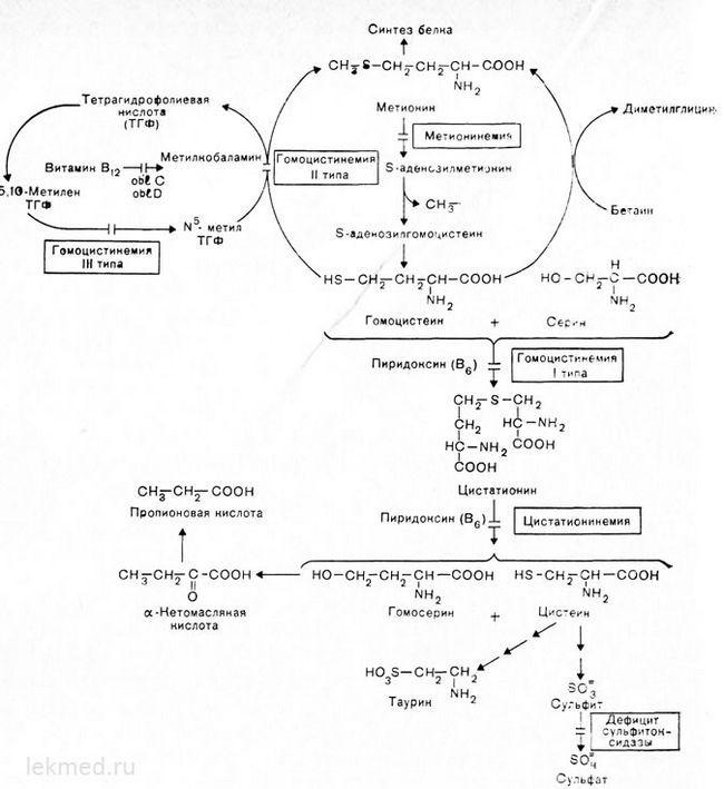 Шляхи метаболізму сірковмісних амінокислот