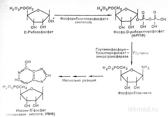 етапи біосинтезу пуринового кільця