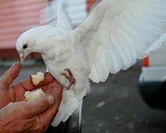 Орнітоз - захворювання, що передається людині від птахів