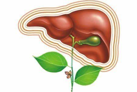 Відфільтрована вода і ще п`ять способів підтримки здоров`я печінки