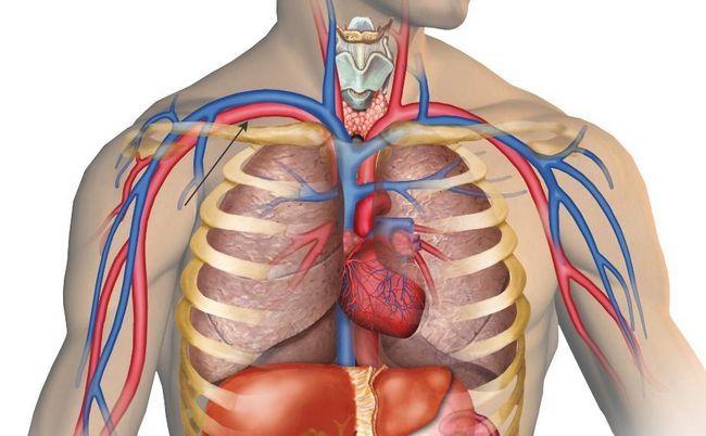 підключичної артерія