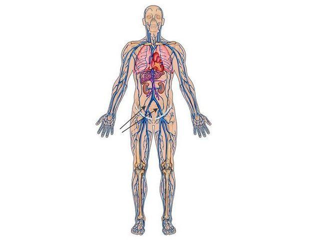 Подвздошная артерія