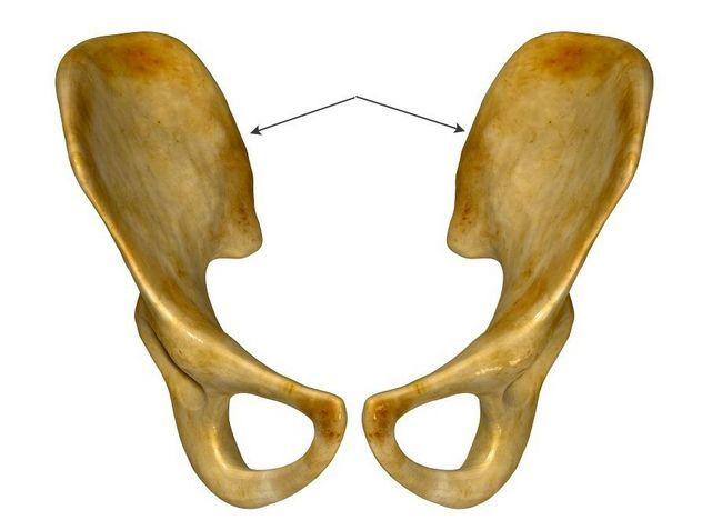 Клубова кістка