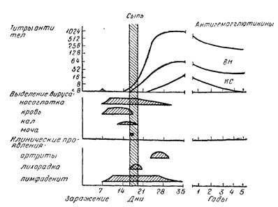 Співвідношення клінічних проявів краснухи
