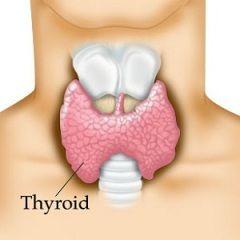 Група захворювань щитовидної залози - тиреоїдит