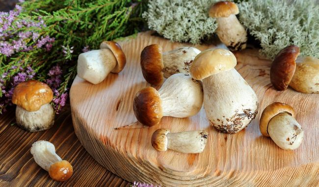 Білі гриби - джерело вітаміну B3