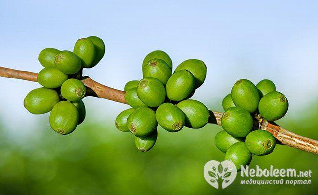 Все, що ви хотіли знати про зелений кави